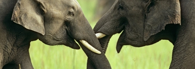 23022_happyelephants_6_958x340